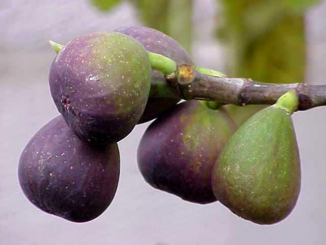 früchte verbinden 3